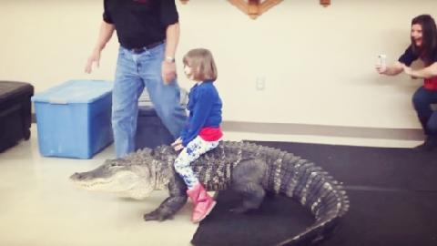 Bé gái cưỡi cá sấu hơn 90 kg trong tiệc sinh nhật