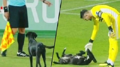 Chú chó siêu đáng yêu xen ngang trận đấu, nằm ngửa ra sân đòi thủ môn gãi bụng