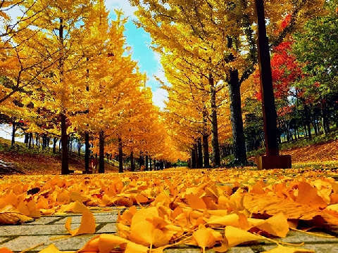 Mùa thu vàng rực ở xứ Vermont