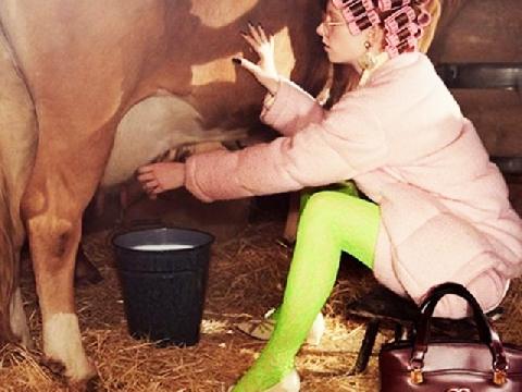 Người mẫu của Gucci thi nhau cưỡi heo, vắt sữa bò