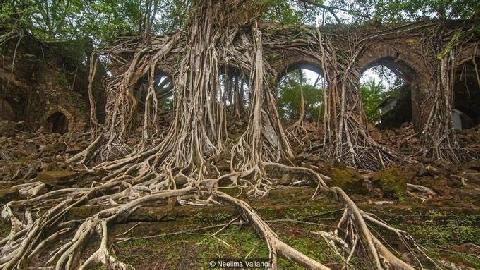 Thị trấn ma bị cây rừng xâm chiếm