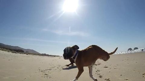 Chó 2 chân chạy nhanh như... ngựa