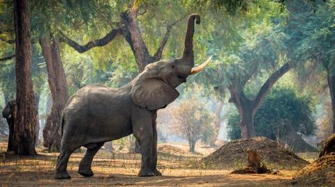 Ảo thuật vi diệu, 5 giây 'biến hóa' ra một chú voi 5 tấn