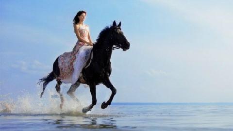 Trải nghiệm tắm với rái cá và lướt sóng trên lưng ngựa ở San Diego