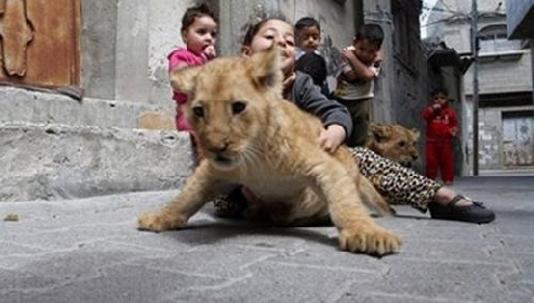 Những con thú cưng đặc biệt trong gia đình
