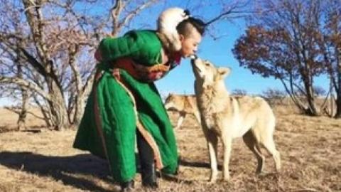 Cô gái xinh đẹp dùng miệng mớm thức ăn cho 8 con chó sói