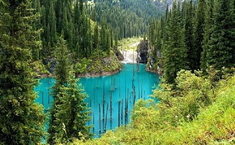 Bí ẩn rừng cây mọc ngược giữa lòng hồ ở Kazakhstan