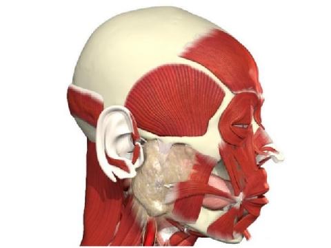 Cơ mặt của bạn sẽ ra sao khi bị bóng ném vào mặt?