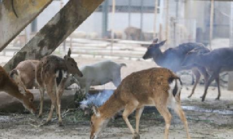 Xem công viên Thủ Lệ chống rét cho thú quý