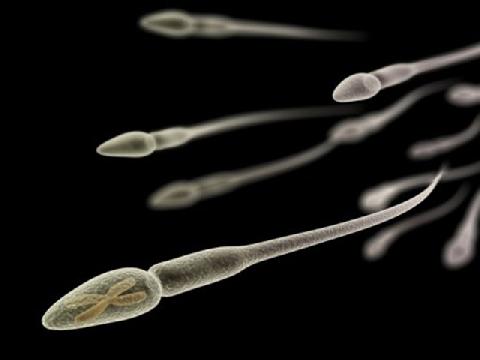 Khi bạn quan hệ, tinh trùng đã ''chạy đua'' như thế nào?