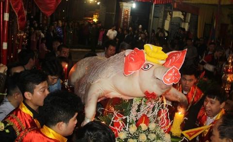 'Ông lợn' được ăn hoa quả, ngủ trong màn để phục vụ lễ hội