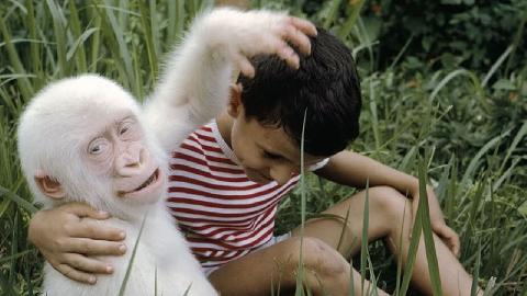 Khỉ lao vào nhà dân bắt cóc bé trai để có bạn chơi cùng