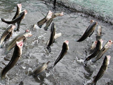 Slow motion khoảnh khắc cá nhảy 'tanh tách' lên không trung