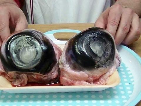 Khi nhãn cầu cá ngừ đại dương trân trân nhìn người ăn