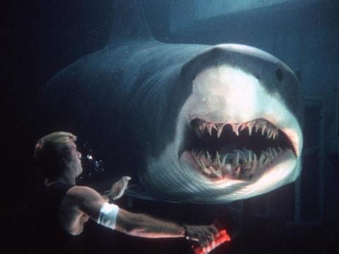 Lựa chọn sống còn: căn phòng có cá mập hay tên sát nhân hàng loạt?
