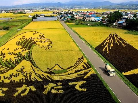 Đỉnh cao: Trồng lúa nghệ thuật của người Nhật
