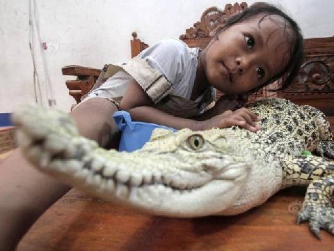 Bé gái 3 tuổi ngủ chung với cá sấu, chơi với trăn và bọ cạp