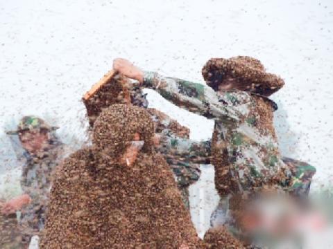 Ngôi làng bị hàng triệu con ruồi bao vây, ''cầm tù''