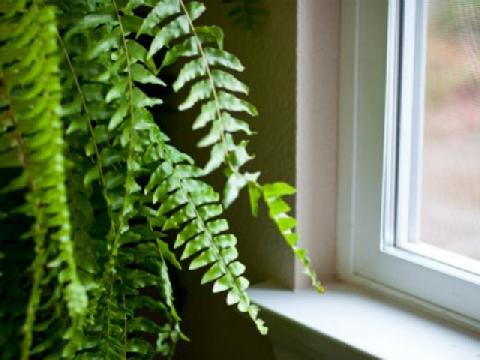 5 mẹo giúp nhà cửa mát mẻ hơn trong những ngày nắng nóng
