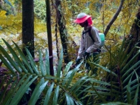 ''Đảo Ăn Cây Độc'' bí ẩn ở Nhật Bản