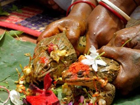 Làm đám cưới cho ếch