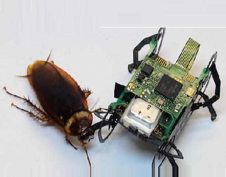 Robot gián với khả năng sinh tồn tuyệt vời