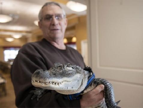 Người đàn ông tự chữa trầm cảm bằng cách nuôi cá sấu
