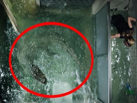 'Crawl' - Phim kinh dị đáng sợ về cá sấu khổng lồ