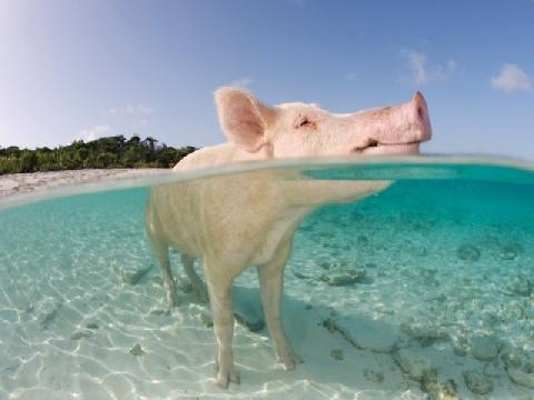 Biển heo và những bãi tắm đẹp bí ẩn thế giới