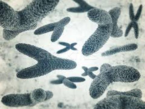 Nhìn lại lịch sử: Đại dịch cúm châu Á (1956-1958)