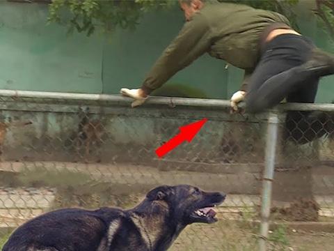 Thanh niên số nhọ bị chó đuổi đứt phanh khi chạy thể dục
