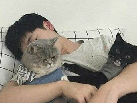 Hy hữu: Ly dị vì vợ quá yêu mèo