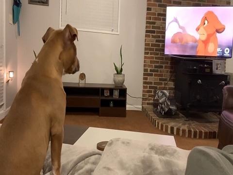 Phát sốt với clip: Chú chó khóc khi xem phim hoạt hình