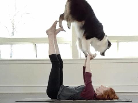 Chú chó tập yoga, chơi đàn, vẽ tranh