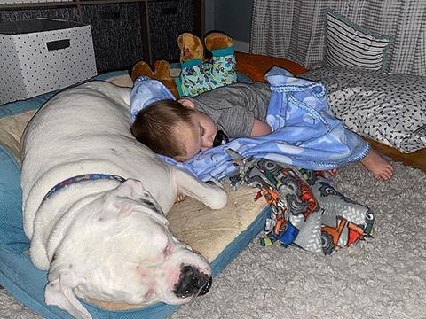 Tình bạn kỳ diệu của cậu bé 23 tháng tuổi với chú chó vệ sĩ