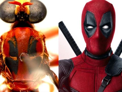 Loài ruồi được đặt theo tên các siêu anh hùng Marvel
