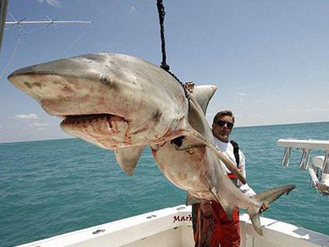 Ngư dân hốt hoảng khi câu được cá mập trên biển