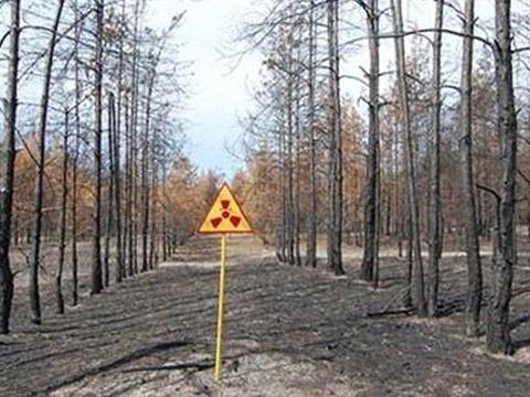 Chernobyl: Rừng cây chết kỳ lạ, 30 năm không phân hủy